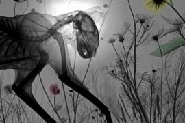 صور حيوانات ونباتات حقيقية بالوضع الطبيعي لكن باشعة اكس !