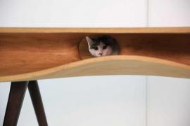 صور : طاولة ديكور داخلي وتسلية للقطط !