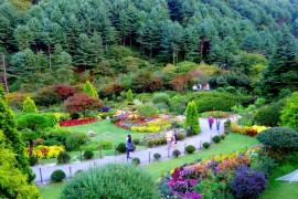 صور : في كوريا الجنوبية حديقة من أجمل الحدائق في العالم