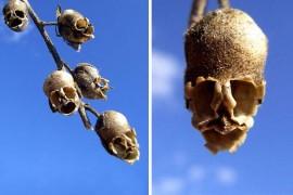 صور : أزهار غريبة تشابه أشياء أخرى كالانسان والحيوانات والطيور والحشرات