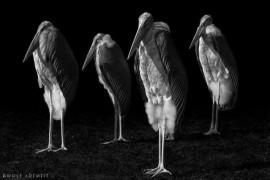صور : محترف يصور الحيوانات في حديقة الحيوان بطريقة مختلفة