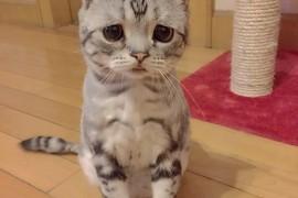 صور : قطة ذات النظرات الحزينة من مشاهير انستقرام